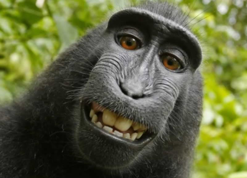 A Monkey clicked its own Selfie; now PETA says the Monkey owns the right of the Selfie